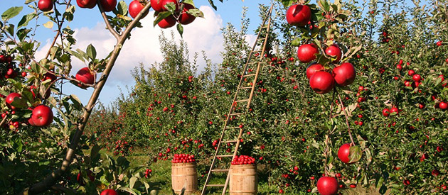 Agricultural machinery needed for fruit farming