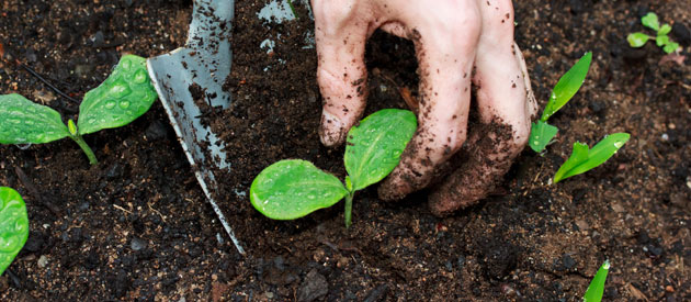 Tips for improving the health of your soil