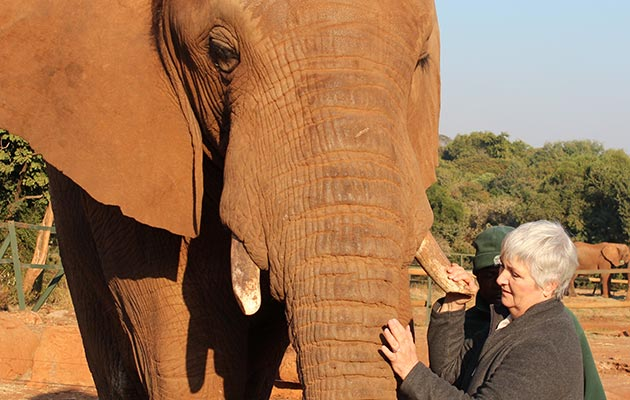 The Elephant Sanctuary -Hartbeespoort Dam - North West