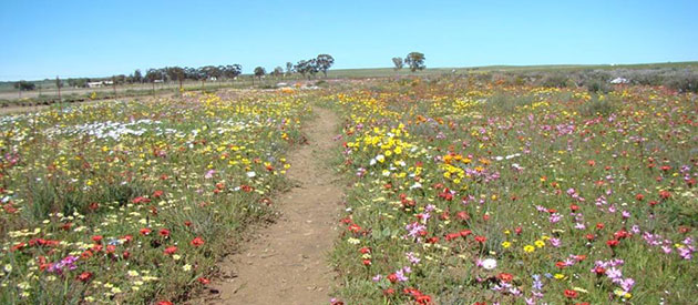 HANTAM National Botanical Garden, Nieuwoudtville, Northern Cape