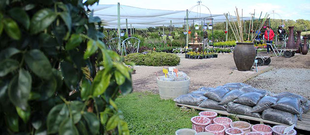 Bargain Nursery, George, Garden Route, www.south-africa-info.co.za